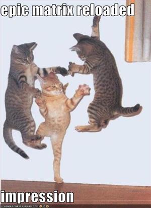 cats_matrix